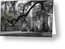 Oak Limb At Old Sheldon Church Greeting Card