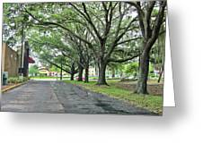 Oak Lined Drive Greeting Card