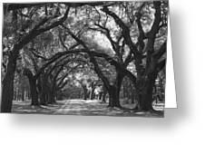 Oak Lined Drive Way, Coastal, South Carolina  Greeting Card