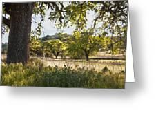 Oak Meadow Greeting Card