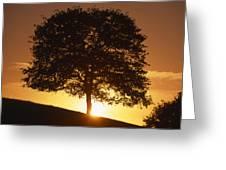 Oak Metal Greeting Card