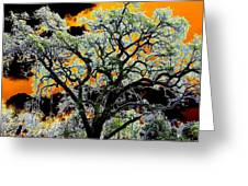 Oak Oasis Greeting Card