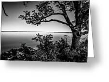 Oak On A Bluff - Black And White Greeting Card