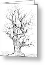 Oak Tree Abstract Study Greeting Card