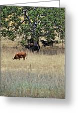 Oak Tree And The Cows Greeting Card