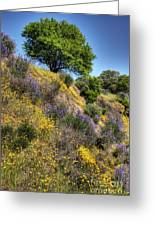 Oak Tree And Wildflowers Greeting Card