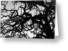 Oak Tree In Winter Detail - Amador County, California Greeting Card
