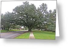 Oak  Tree  Jennings  Louisiana Greeting Card