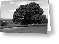Oak Tree - Killarney National Park Greeting Card