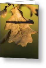 Oak Tree Leaf Greeting Card