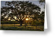 Oak Tree Sunset Greeting Card