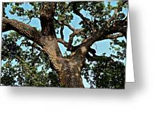 Oak Tree Two Greeting Card