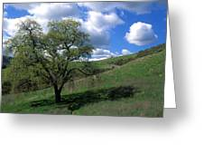 Oak Tree With Clouds Greeting Card