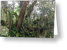 Oak Tree With Spanish Moss Greeting Card