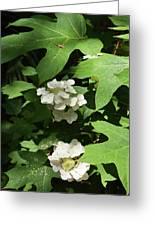 Oakleaf Hydrangea Floral Greeting Card
