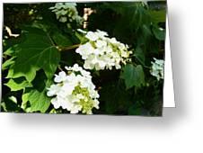 Oakleaf Hydrangea Greeting Card