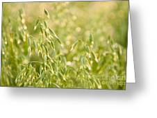 Oats Plants Detail Greeting Card