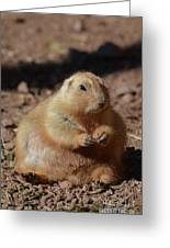 Obese Prairie Dog Sitting In A Pile Of Dirt Greeting Card