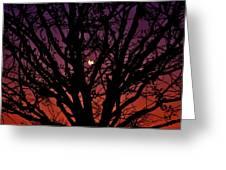 Ocala Moonrise Greeting Card