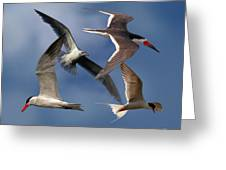 Ocean Bird Collage Greeting Card