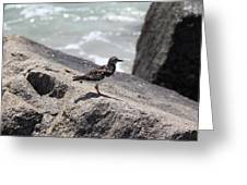 Ocean Bird Greeting Card