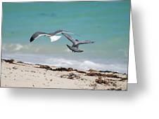 Ocean Birds Greeting Card
