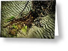 Ocean Bouquet Greeting Card