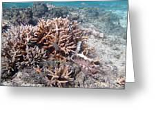 Ocean Fiji Greeting Card