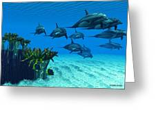 Ocean Striped Dolphins Greeting Card