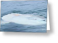 Ocean Sunfish Greeting Card