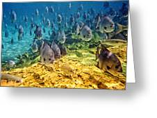 Oceans Below Greeting Card