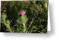 Oceanside Wildflower With Bee Greeting Card