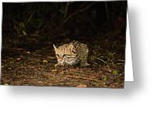 Ocelot Crouching At Night Looking For Food Greeting Card