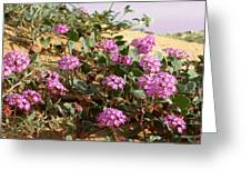 Ocotilla Wells Pink Flowers 2 Greeting Card