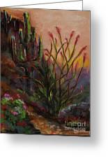 Ocotillo At Sunset Greeting Card