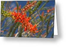 Ocotillo Blossomj Greeting Card