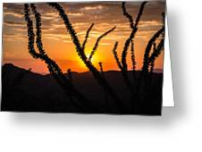 Ocotillo  Greeting Card