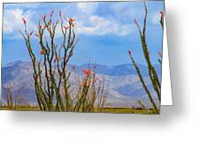 Ocotillo Cactus With Mountains And Sky Greeting Card
