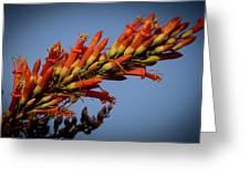 Ocotillo Flower Greeting Card