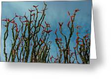 Ocotillo Flowers Greeting Card