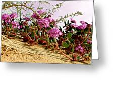 Ocotillo Wilds Greeting Card