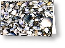 Ocracoke Shells Greeting Card