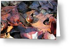 October Acorn Greeting Card