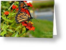 October Butterfly Greeting Card