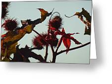 October Light Greeting Card