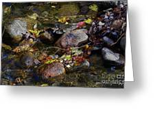 October Puddles Greeting Card