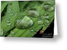 Big Drops Of Rain Greeting Card