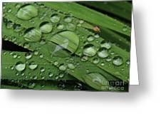 Drops Of Rain Greeting Card