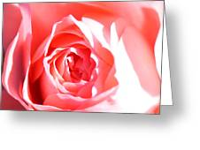 October Rose Close Up Greeting Card