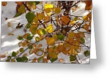 October Snow Greeting Card